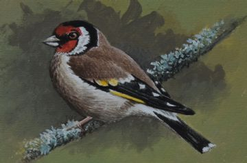 David Parry Original Watercolour Painting Of A Goldfinch Bird